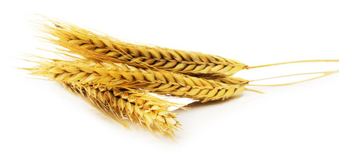 ears of wheat isolated on the white background