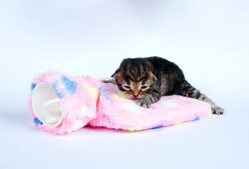 Katzenbaby ist krank
