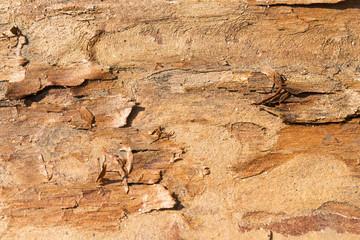 Natural pine bark textured background.