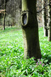 Frühling im Wald. Deutschland