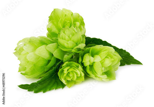 Papiers peints Vegetal green hops isolated on the white background