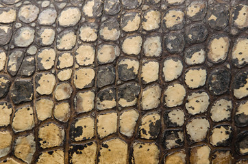 Crocodile skin texture for background