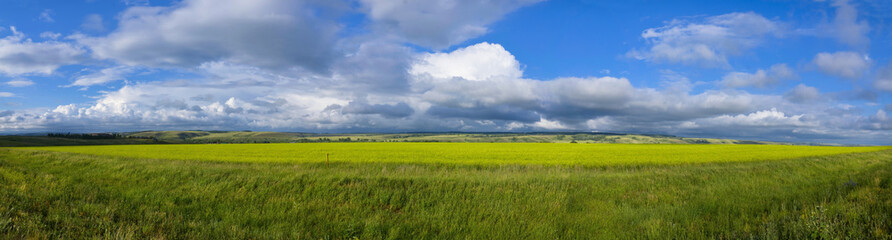 Panoramic View of Field