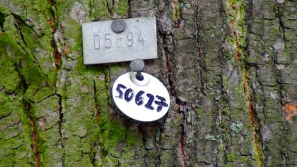 Учёт деревьев в Берлине