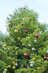 クリスマスツリー 青空 昼間