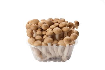 brown shimeji mushroom