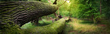 Panoramic image of fallen tree in the forest