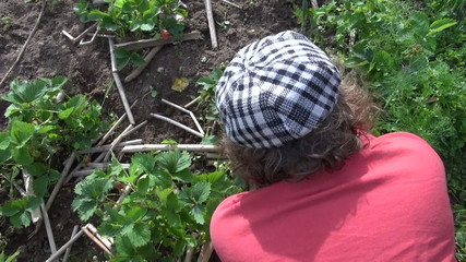 woman with glove and hoe weed strawberry in garden. Handiwork