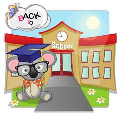 Koala and school