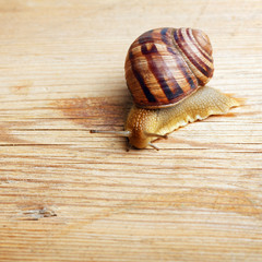 close up of snail crawling over a piece of wood