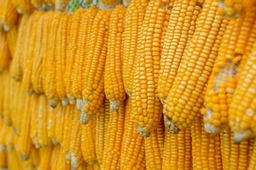 dried corn hanging