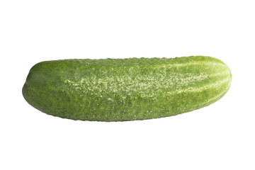 A fresh and tasty green vine ripened garden grown cucumber isola