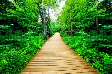 Wooden way in green forest, lush bush. Peaceful nature
