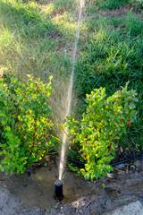 Grass watering. Spinkler in the garden, sunset