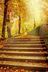 Sunlight in autumnal park