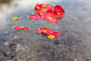 Petals and flowers in water