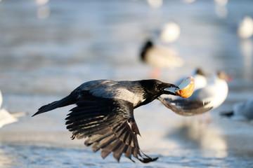 hoodie crow flies wings food