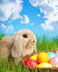 Little Easter bunny and Easter eggs on green grass