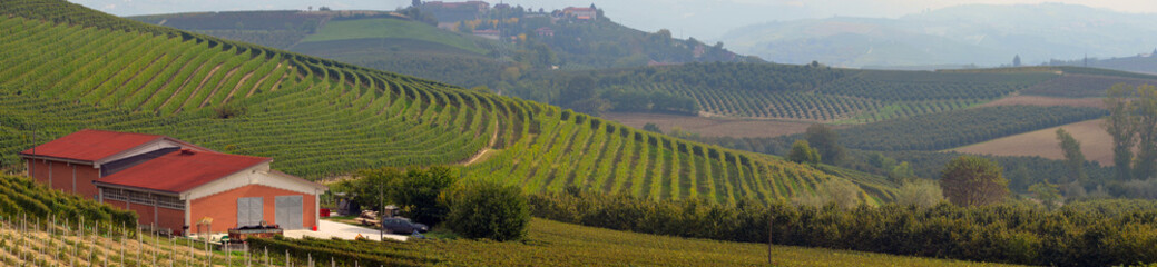 vineyards in Italy, panorama