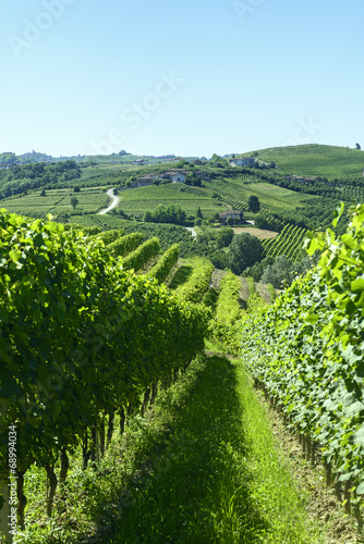 Summer landscape in Langhe (Italy) - 68994034