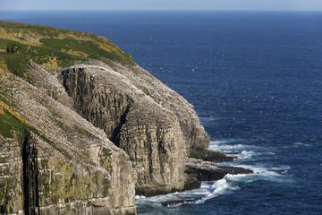 Cape St. Mary's Ecological Reserve, Newfoundland, Canada