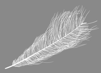 white ostrich feather silhouette on grey