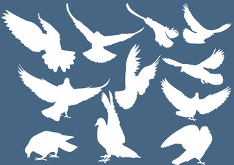 set of eleven white pigeons on blue