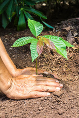 hand of farmers planting a tree seedling