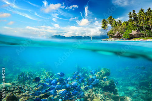 Coral reef, colorful fish - 68997058