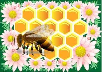 beeswax with bee