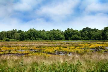 Moor - Moorlands