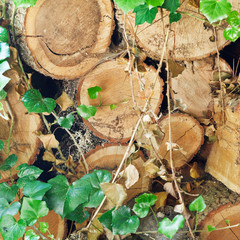 woodpile of old woods