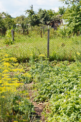 green garden on country backyard