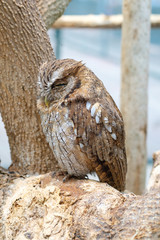 Wild owl on the tree