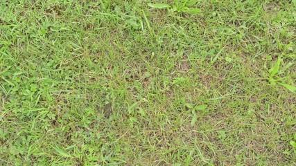 green grass - background