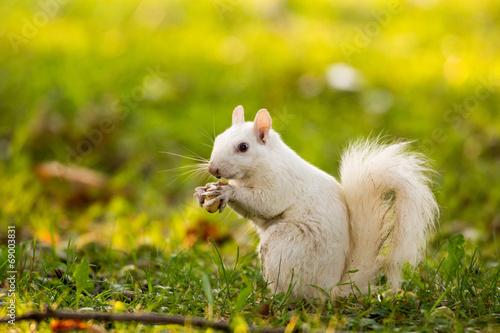 Aluminium Eekhoorn White squirrel in Olney