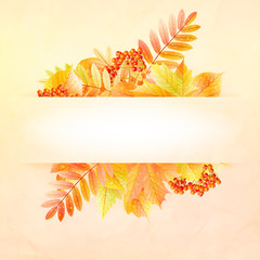 Autumn abstract background with colorful leafs.