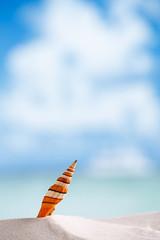 stripped clown sea shell with ocean , beach and seascape