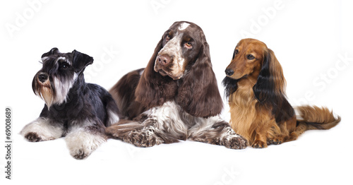 Deurstickers Franse bulldog Group of dogs sitting in front of a white background