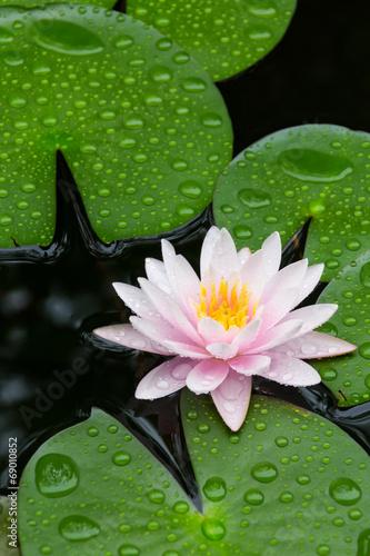 Deurstickers Water planten Pink Lotus