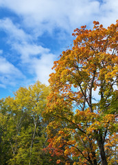 bright autumn tree in park