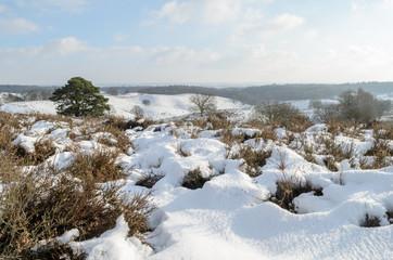 Snow on hills in Dutch heathland
