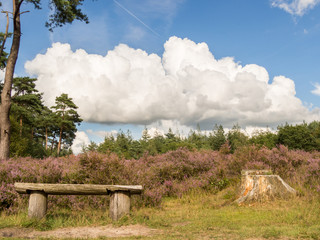 Bench in heathland with dramatic cloud in sky