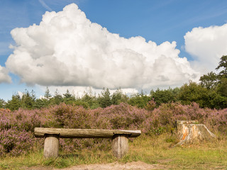 Bench in heathland and dramatic sky