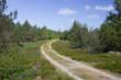 Waldweg durch die Heide
