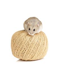 Dwarf Hamster on String Ball
