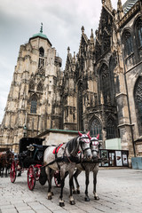 Horses outside Saint Stephan Cathedral in Vienna