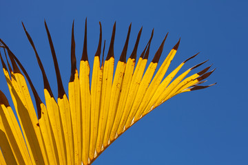 yellow and blue palm leaf abstract