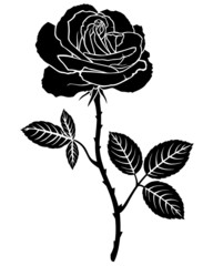 Rose flower silhouette