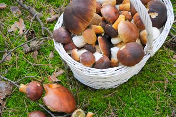gesammelte Pilze